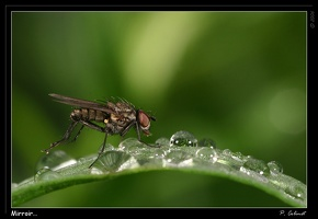 mouche herbe pluie2 filtered39